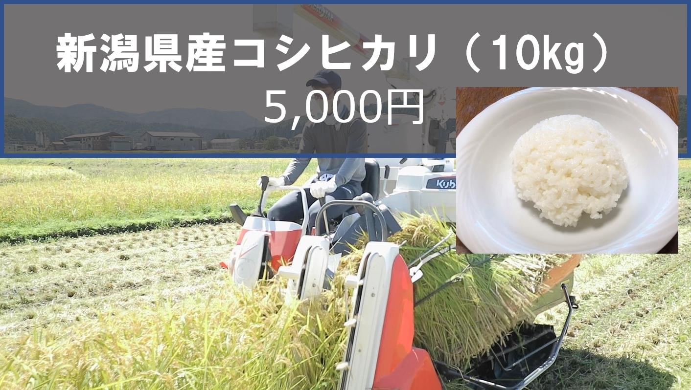新潟県産コシヒカリ10kg5,000円